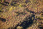 Tussock grass, Purnululu National Park, Australia