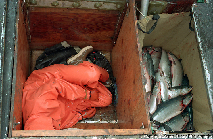 """Rama Geroux from Mill Valley, CA sleeps in a fish hold June 1997, The F/V Little Comfort, a salmon fishing boat, in Egegik River, Bristol Bay, Alaska. Bristol Bay is home to the world's largest sockeye salmon fishery. The commercial salmon drift gillnet fishing fleet is limited to boats no longer than 32 feet in length. There were over 1,800 permanent entry permits listed in 2002 which each vessel is required to have. Typically boats fish with two or three deckhands. Peak of the season is around July 4th in this fishery which lasts about a month. The rivers also get a fair amount of chum, king, and chinook salmon. Bristol Bay is located in the southwest part of Alaska. This fishery is managed by """"the Alaska Department of Fish and Game"""" and is a sustainable fishery. Until around the year 2000, fishing on the Egegik North Line was lively and lucrative."""