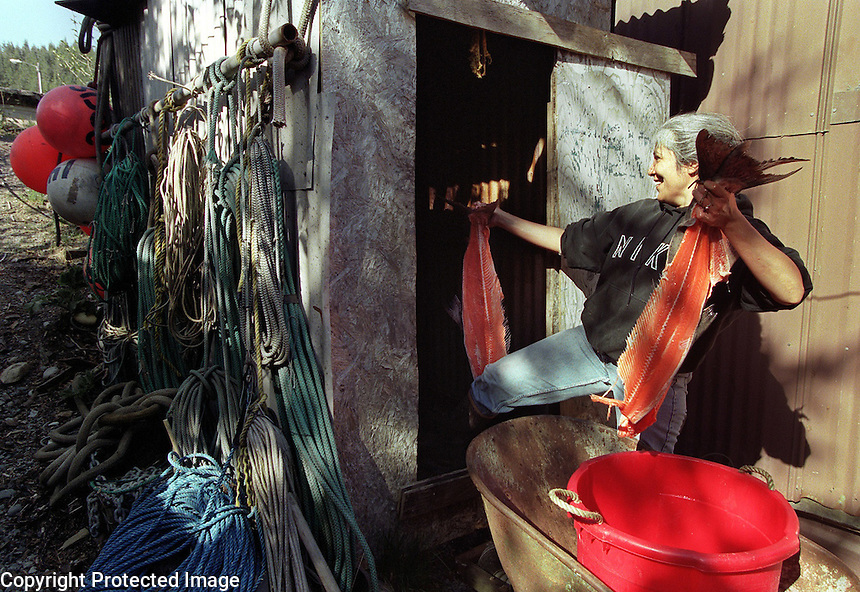 Pam Smith loads King Salmon backs into her smokehouse behind her home in Cordova, Alaska. Copper River Salmon