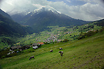 Cows in the fields and meadows overlooking the town of Wenns. Imst district, Tyrol/Tirol. Austria.