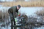 Foto: VidiPhoto<br /> <br /> OOIJ - Muskusrattenvanger Nico Evers maakt donderdag langs de Ooysebandijk in Ooij bij Nijmegen een vangkooi voor muskusratten gereed. In 2015 is het aantal gevangen muskusratten gedaald tot onder de 90.000. Dat betekent dat de al eerder ingezette daling doorzet. De daling ten opzichte van 2014 is ruim 6 procent. Tegelijkertijd is het aantal gevangen beverratten opgelopen tot ruim 1200 en dat is een stijging van 16 procent. De vangsten concentreren zich in het grensgebied met Duitsland. Zo'n 90 procent van de vangsten komen daar vandaan. De beverrat komt oorspronkelijk uit Zuid-Amerika en is door de zachte winters snel in aantallen toegenomen, vooral in Duitsland. Daar wordt het dier echter nauwelijks bestreden, met als gevolg een instroom in Nederland. Muskus- en beverratten zorgen voor grote veiligheidsrisico's doordat ze gangenstelsels maken in waterkeringen.