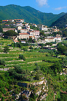 Vineyards near Ravello. Amalf Coast, Italy