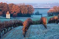 Europe/France/Midi-Pyrénées/32/Gers/Saint-Puy: Le vignoble gascon dans le givre à l'aube