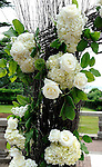 Tappan Hill Wedding Bouquets and Floral Arrangements by .Forever In Bloom, Mt. Kisco.