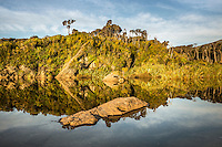 Ship Creek reflections and native rainforest near Haast, West Coast, South Westland, UNESCO World Heritage Area, New Zealand, NZ