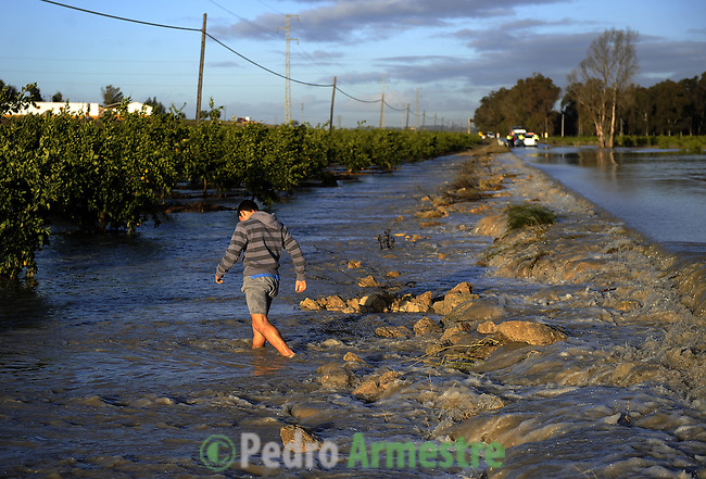 A man is seen in a field of orange in La Ina, near Jerez de la Frontera in Cadiz is pictured after it was closed on january 05, 2010 for the heavy rain. (c)Pedro ARMESTRE.