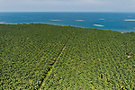 Aerial of palm (Elaeis quineesis Jacq) oil plantation of New Britain Pam Oil Limited (NBPOL)