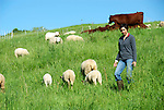 Green Dirt Farm Sheep and Milking