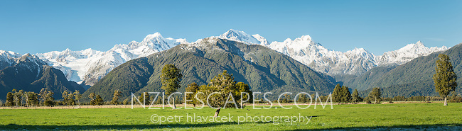 Winter morning on farmland with views of Fox Glacier, Mt. Cook and Mt. Tasman of the Southern Alps, Westland Tai Poutini National Park, West Coast, UNESCO World Heritage Area, South Westland, New Zealand, NZ
