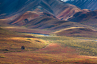 Autumn colored tundra near the Polychrome mountains surround a glacial erratic - a large rock left over from glacial deposits - in Denali National park.