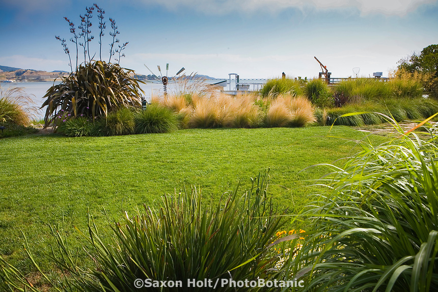 Lush green lawn in backyard garden next to San Francisco Bay edged with ornamental grasses