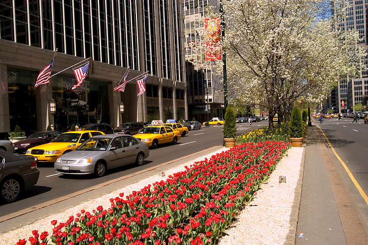 New York City, New York: Tulips on Park Avenue .Photo #: ny284-14917  .Photo copyright Lee Foster, www.fostertravel.com, lee@fostertravel.com, 510-549-2202.