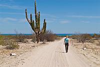Adult female walking along dirt road, Baja California, Mexico