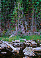 Evergreen trees bordering Dream Lake. Rocky Mountain National Park near Estes Park Colorado. September 27, 1998.