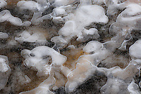&quot;ICE PUPPIES&quot;<br /> <br /> Ice formations along a river's edge creating intricate and beautiful designs