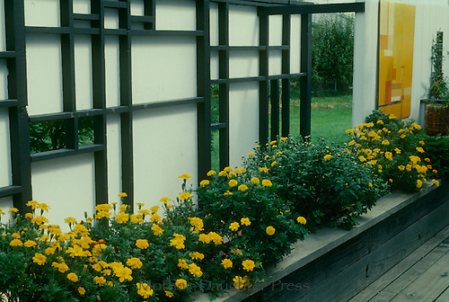 Privacy screen on deck with yellow flowers