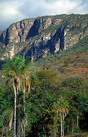Plateau in Brazilian  Highlands, Goiás State, Brazil; palm trees in foreground  is probably Acrocomia aculeata, a very widespread and variable species (from Mexico to Argentina and the Antilles)