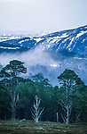 Caledonian pines, Glenfeshie, Scotland. <br /> An old growth forest in the foothills of the Cairngorms. <br /> This Caldedoniam pine forest used to cover much of Scotland but has been destroyed by deer over grazing and clearances.