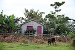 South America, Brazil, Amazon. Idyllic farm scene on the Amazon River.