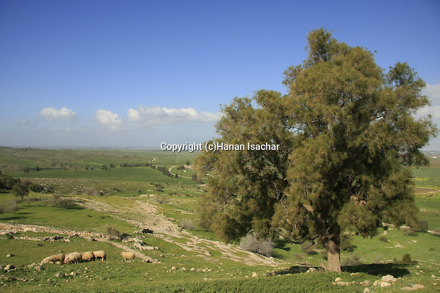 Israel, Shephelah. A view of the Shephelah from Tel Zafit, identified as Gath, one of the ancient Canaanite and Philistine five cities (along with Gaza, Ekron, Ashkelon, and Ashdod)