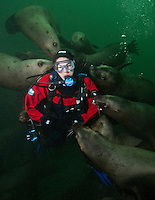 TA1072-D. Steller Sea Lions (Eumetopias jubatus), playful juveniles interacting with scuba diver (model released), biting hoses, gloves, etc. just like puppy dogs. British Columbia, Canada, Pacific Ocean.<br /> Photo Copyright &copy; Brandon Cole. All rights reserved worldwide.  www.brandoncole.com