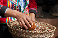Quechua woman shows plants used to dye wool Cusco Peru, South America