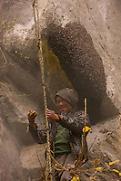 """The rebokipe are the ladder attendants (""""rebo"""" means rope ladder in the Rai language). With their full weight hanging from the ladder, they keep it pulled tight to facilitate the guru's progress and move the ladder from one nest to another."""