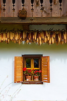 Corn, maize,  cobs drying - Hungary