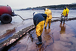 Oil on beaches being cleaned up following the 72,000 tonne  oil spill on the Pembrokeshire coast from the Sea Empress oil tanker