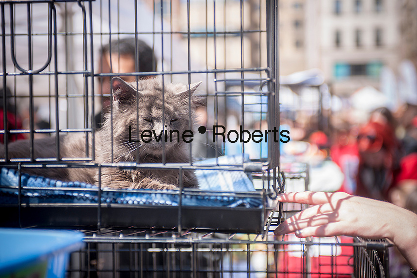 Hundreds of animal lovers and their furry friends descend on Union Square in New York for Adoptapalooza on Sunday, April 10, 2016. Hosted by the Alliance for NYCs Animals the event featured hundreds of homeless animals just waiting to be adopted by loving families. The event celebrated the 150th anniversary of the ASPCA.  (© Richard B. Levine)