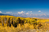 Golden Aspens and the Grand Tetons from the Bridger Teton National Forest.