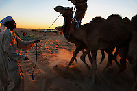 Trainers control camels preparing for a morning judging at the Camel Beauty Contest an hour outside of Abu Dhabi.  The Al Dhafra Festival put on by the Abu Dhabi Authority for Culture and Heritage is under the patronage of His Highness General Sheikh Mohammed bin Zayed Al Nahyan.