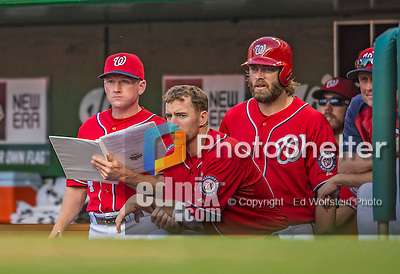 8 June 2013: Washington Nationals batting coach Rick Eckstein looks over the Advance Reports on the visiting team during a game against the Minnesota Twins at Nationals Park in Washington, DC. The Twins edged out the Nationals 4-3 in 11 innings. Mandatory Credit: Ed Wolfstein Photo *** RAW (NEF) Image File Available ***