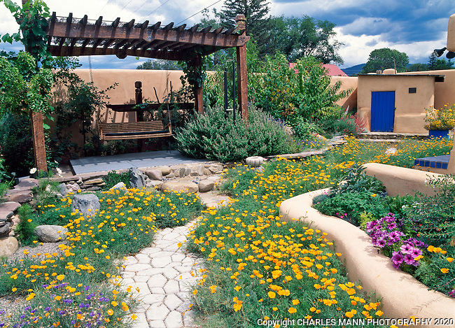 Susan Blevins of Taos, New Mexico, created an elaborate home garden featuring containers, perennial beds, a Japanese themed path and a regional style that reflects the Spanish and pueblo architecture of the area. A pergola with a swing sits amid a sea of California poppies.