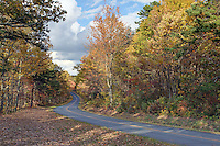 A scenic road and byway on the Blue Ridge Parkway in Nelson County, VA. Photo/Andrew Shurtleff