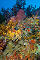 Coral and Sponge Reef Scenic<br />