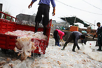 """Zhapo, PRC China has a huge Jellyfish fisherie, the entire town slings laundry tubs of gelatinous mucous like jellyfish if it is cloudy day and they can see the masses of jelly from their boats.  You have to be aware of cultural differences... People in China like to eat jellyfish because of the texture.  But, to me, a jellyfish fishery is """"fishing down the food chain.""""  With less and less predators (sharks are down 80 percent) this kind of creature that is lower on the food chain tends to thrive..There are four guys carrying laundry tubs of mucous goo.... they are Cai Xing Duan (crooked back), Cai Xing Ping, Wang Fu Quan, and Cai Xiao Yuan... Contact is thru Cai Xing Ping (who helped us on other stuff) address is Qing An Street, Zhapo, Yangjiang, Guangdong, China..Main contact:.Nicole_artbud@hotmail.com or nicolecheng@vip.sina.com.Cell phone number: +(86) 139 2214 1600.Nicole Cheng.Senior Associate-Guangzhou.Burson Marsteller.Room 6805A, CITIC Plaza, 233 Tianhe North Road.Guangzhou, 510613 P.R.C..+8620 3877 1820 X229 Work Phone.3877 1815 Fax.Nicole_cheng@bm.com.Initially reef fish only came from the South China Sea, but transport developed and fish now come from all over S.E. Asia.  The whole reef fish trade crashed with the 97-98 HK stock market crash.  LRF trade is directly linked to economy.  With China coming online financially the trade is booming.  These fish are often used for celebratory meals in Hong Kong, but in Guangzhou the fish are so cheap and the apartments are so small that many people eat out...  And the stereotype is that there is lots of food left on the table.  Often a fish is popular because of its color... more than its taste."""