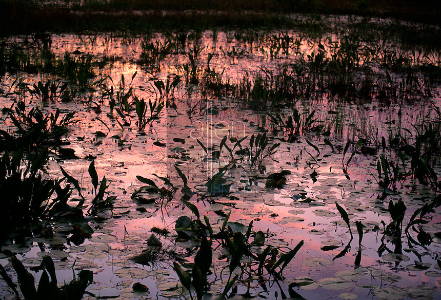 Vegetation in the Okefenokee Swamp at sunset with reflected sky, southern Georgia, USA, 1995.