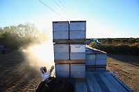 At nightfall, the hives are put in the truck. A beekeeper fills the entrance to the hives with smoke to calm the aggressiveness of the guardian bees.