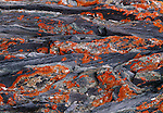 Rocky terrain covered with orange lichen in the Arctic National Wildlife Refuge.