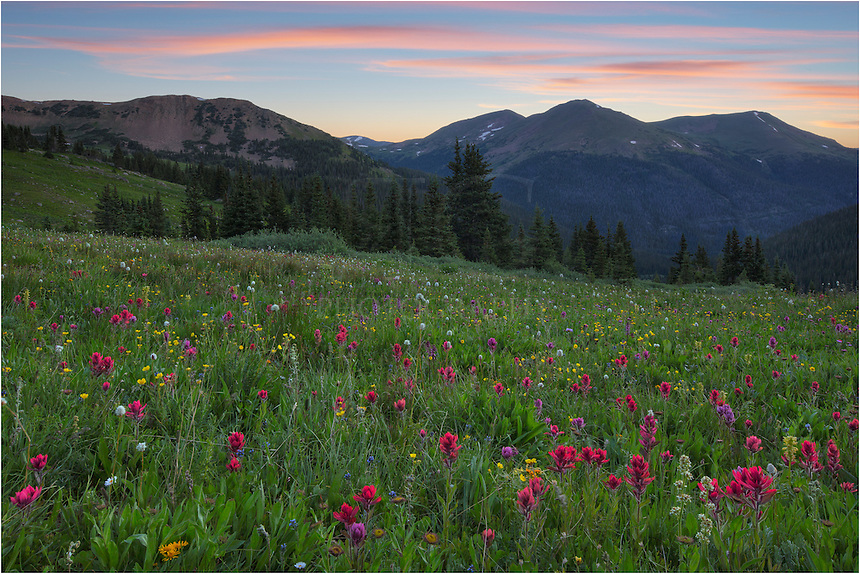 The morning clouds were soft and the wildflowers abundant along the trail in Butler Gulch, one of my favorite locations for landscape photography in Colorado. I tend to visit this place several times each summer, making the short hike (~ 2.3 miles to this spot) in the dark in order to arrive before sunrise. I've never seen folks there at that time, but usually when I'm heading down about 7:30am I run into many hikers. This is a beautiful spot, for sure, and is also popular with snow-shoers in the winter. If you hike further, there is an old mine about a mile or so up the trail, as well.<br /> <br /> Just over the ridge and down again is the town of Winter Park. Butler Gulch is right off of Highway 40 as you go through the one-horse town of Berthoud Falls. Look for the Big Bend Camp Ground and follow the signs on the left.