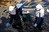 Scottsdale, Arizona (January 12, 2013) - As part of a seven-year plan to dry up all portions of its 131-mile canal system, Salt River Project (SRP), relocated the White Amur fish they used as an environmentally friendly and cost effective alternative to herbicides and heavy machinery for vegetation control. In this image, workers inside the canal stretch wire fence used to create a physical barrier for fish, so they can be corralled and gather for transport to another section of the canal. Photo by Eduardo Barraza © 2013