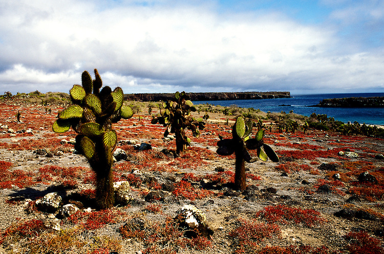 Ecuador: Galapagos..South Plaza Island. Photo: galapa101..Photo Copyright Lee Foster, 510/549-2202, lee@fostertravel.com, www.fostertravel.com...Photo #: galapa101