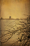 Winter countryside scene with thorn bush and church in distance beyond fields with snow