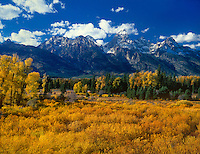 749450293 narrowleaf cottonwoods populus angustifolia and willows in brilliant fall color frame the tetons in late afternoon light from blacktail ponds overlook in grand tetons national park wyoming