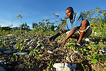 Abel Dupres weeds his farm field early in the morning in Despagne, a rural village in southern Haiti where the Lutheran World Federation has been working with residents to improve their quality of life.