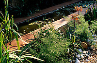 This raised pond edged with terracotta tiles is planted with wild water irises and lilies and surrounded by fennel and indigenous succulents