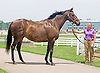 Slewcy's Gale, by Slew City Slew - a truly rare brindle Thoroughbred mare, b. 1995, at the Kentucky Horse Park in June 2010.