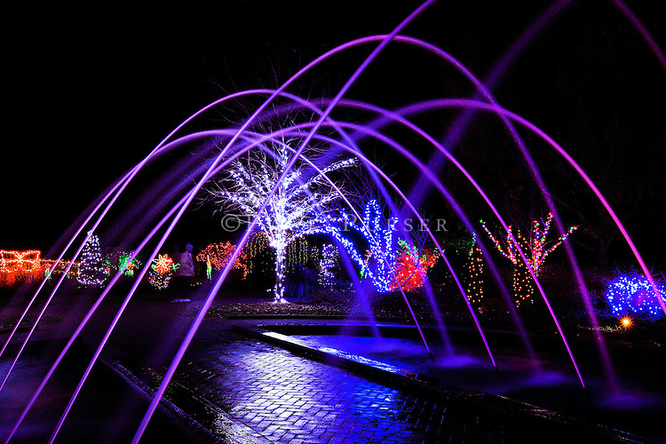 Daniel stowe botanical garden lights in the garden - Daniel stowe botanical garden christmas ...