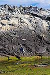 Fernandina Island in the Galapagos National Park, Galapagos, Ecuador, South America